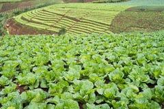 sikt för grönsallatfältberg Arkivfoto