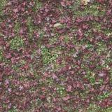 Sikt för hög vinkel av Autumn Dry Leaves arkivfoto