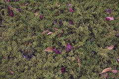 Sikt för hög vinkel av Autumn Dry Leaves fotografering för bildbyråer