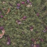 Sikt för hög vinkel av Autumn Dry Leaves royaltyfri foto