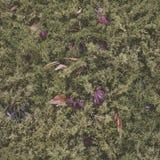 Sikt för hög vinkel av Autumn Dry Leaves arkivbilder