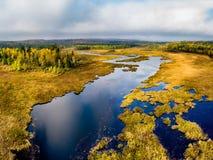 Sikt för hög vinkel av en guld- våtmark och skog arkivbilder