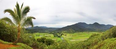 Sikt för hög vinkel av Tarofält Arkivfoton