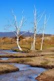 sikt för höstdagInner Mongolia plats Arkivbilder