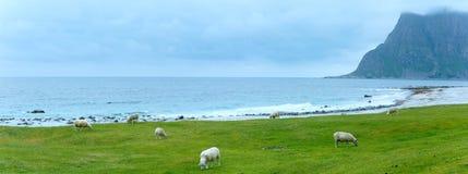 Sikt för Haukland strandsommar (Norge, Lofoten) Arkivfoto