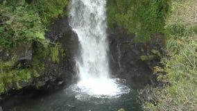 Sikt för Hawaii vattenfallcloseup stock video