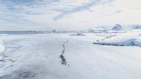 Sikt för kust för flyttning för Gentoo pingvinkoloni flyg- arkivfilmer
