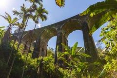 sikt för låg vinkel av den järnväg vägen och olika träd med grön lövverk i Asien Arkivfoton