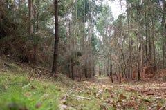 Sikt för låg vinkel av en höstskog arkivfoto