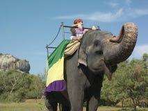 Sikt för låg vinkel av manridningen på elefant royaltyfria foton