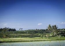 Sikt för landskap för rispaddiefält i södra bali indonesia royaltyfri foto