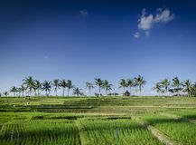 Sikt för landskap för rispaddiefält i södra bali indonesia royaltyfri fotografi