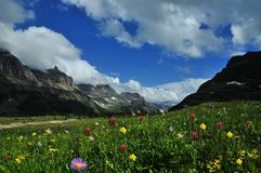 Sikt för Logan Pass Panoramic naturlandskap av lösa blommor och berg arkivfoton