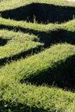 sikt för maze för labyrint 3d övre Royaltyfria Foton