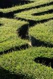 sikt för maze för labyrint 3d övre Royaltyfri Bild