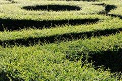 sikt för maze för labyrint 3d övre Royaltyfri Fotografi