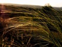 Sikt för naturprärieskönhet av heden arkivfoton