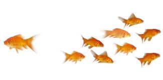 sikt för sida 3D av fisksimning Royaltyfri Fotografi