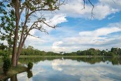Sikt för sjöträd- och berglandskap fotografering för bildbyråer