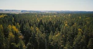 Sikt för skog för surrflyg snabb over härlig bred Sköt fantastisk bakgrund för antennen 4K av träd och öppningshorisont stock video
