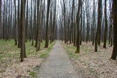 Sikt för skogväg i vårmorgon Royaltyfria Bilder