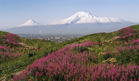 sikt för sommar för ararat armenia dagberg fotografering för bildbyråer