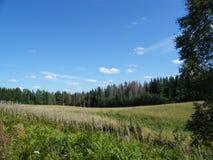 sikt för sommar för vinkelfältgräs wide arkivbilder