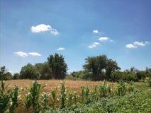 sikt för sommar för vinkelfältgräs wide Royaltyfria Bilder