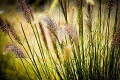 sikt för sommar för vinkelfältgräs wide Arkivbild