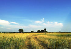 sikt för sommar för vinkelfältgräs wide Fotografering för Bildbyråer