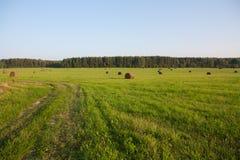 sikt för sommar för vinkelfältgräs wide Royaltyfri Fotografi