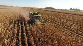 Sikt för surrantenn 4k på enorma åkerbruka medel för sammanslutninglastbilmaskiner som skördar organiskt vete för skördar på lant arkivfilmer