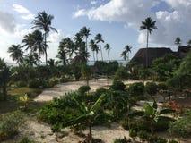 Sikt för trädgård och för hav för ö för paradis för Zanzibar strandsemesterort royaltyfri foto