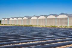 Sikt för växthus med blå himmel Arkivbilder