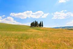 Sikt för Val d'Orciacypressar Royaltyfri Bild