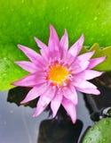 sikt för vatten lilly överst Arkivfoto