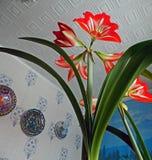 Sikt f?r Amaryllis r?d blommabotten, smalt fokusomr?de arkivfoton