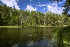 Sikt från banken av skogfloden som tänds av sommarsolen arkivfoto