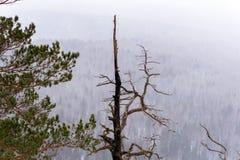 Sikt från berget till skogen under ett snöfall arkivfoto
