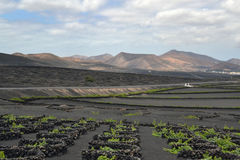 Sikt från bodegasna av La Geria Arkivfoto