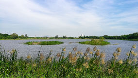Sikt från bredvid floden i blåsig dag Royaltyfri Fotografi