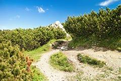 Sikt från de Choc bergen royaltyfria bilder