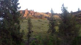 Sikt från de gamla diligensvägarna nära Ashwood, Oregon Royaltyfri Foto