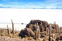 Sikt från den Incahuasi ön Arkivbild