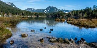 Sikt från en bayersk sjö på Berchtesgaden till fjällängbergen fotografering för bildbyråer