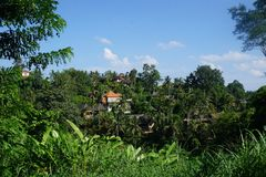 Sikt från en gå på risfält i Bali med palmträd Royaltyfri Fotografi