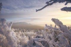 Sikt från entäckt kulle på de djupfrysta träden Frostig mornin Royaltyfria Foton