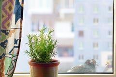 Sikt från ett hem- fönster arkivbild