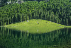 Sikt från i berget i Schweiz Arkivbilder