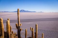 Sikt från Isla Incahuasi, Uyuni, Bolivia arkivfoton
